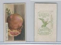 B116-151 BAT Eagle Cigarettes, Animals & Birds, 1912, #15 Fruit