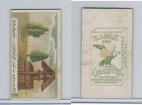 B116-151 BAT Eagle Cigarettes, Animals & Birds, 1912, #16 Well