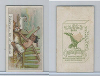 B116-151 BAT Eagle Cigarettes, Animals & Birds, 1912, #17 Wolf