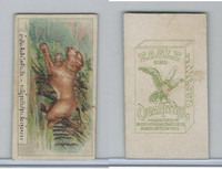 B116-151 BAT Eagle Cigarettes, Animals & Birds, 1912, #18 Tiger