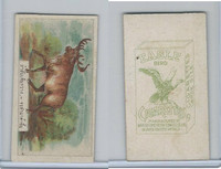 B116-151 BAT Eagle Cigarettes, Animals & Birds, 1912, #21 Moose
