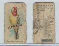 E34 Keystone Confections, Bird Cards, 1910, Red Headed Bunting