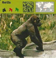 1975 Editions Rencontre, Animals Card, #01.01 Gorilla