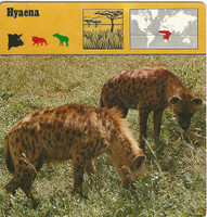 1975 Editions Rencontre, Animals Card, #01.02 Hyaena