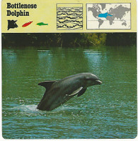 1975 Editions Rencontre, Animals Card, #01.04 Bottlenose Dolphin