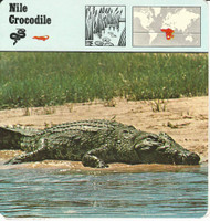 1975 Editions Rencontre, Animals Card, #01.07 Nile Crocodile