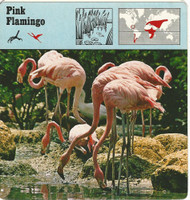 1975 Editions Rencontre, Animals Card, #01.08 Pink Flamingo