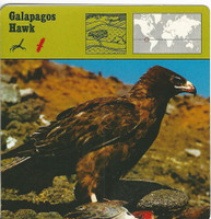 1975 Editions Rencontre, Animals Card, #01.09 Galapagos Hawk