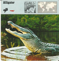 1975 Editions Rencontre, Animals Card, #01.10 Alligator