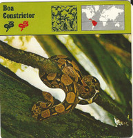 1975 Editions Rencontre, Animals Card, #01.12 Boa Constrictor