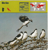 1975 Editions Rencontre, Animals Card, #01.14 Shrike