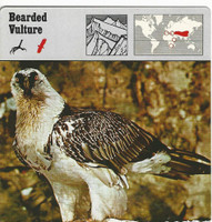 1975 Editions Rencontre, Animals Card, #01.15 Bearded Vulture