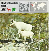 1975 Editions Rencontre, Animals Card, #48.524 Rocky Mountain Goat