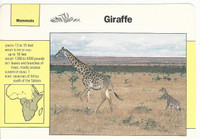 1992 Grolier, Wildlife Adventure Cards, Animals, #1.1 Giraffe