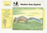 1992 Grolier, Wildlife Adventure Cards, Animals, #1.2 Western Gray Squirrel