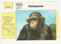 1992 Grolier, Wildlife Adventure Cards, Animals, #1.3 Chipanzee