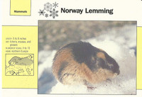 1992 Grolier, Wildlife Adventure Cards, Animals, #1.4 Norway Lemming