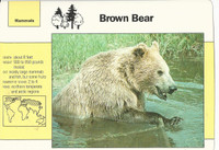 1992 Grolier, Wildlife Adventure Cards, Animals, #1.5 Brown Bear