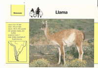 1992 Grolier, Wildlife Adventure Cards, Animals, #1.10 Llama