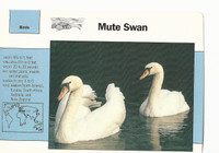 1992 Grolier, Wildlife Adventure Cards, Animals, #1.11 Mute Swan