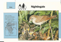 1992 Grolier, Wildlife Adventure Cards, Animals, #1.14 Nightingale