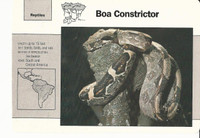 1992 Grolier, Wildlife Adventure Cards, Animals, #1.16 Boa Constrictor