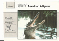 1992 Grolier, Wildlife Adventure Cards, Animals, #1.18 American Alligator