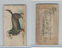N163 Goodwin, Dogs of World, 1890, Dandy Dinmont