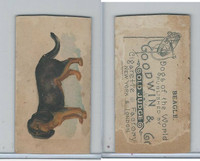 N163 Goodwin, Dogs of World, 1890, Beagle (Trim)