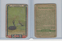 R26 Goudey, Boy Scouts, 1933, #16 The Hooded Cobra
