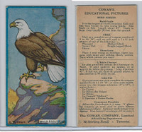 V6 Cowan, Educational Pictures Birds, 1924, Bald Eagle