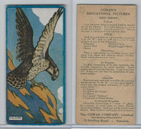 V6 Cowan, Educational Pictures Birds, 1924, Falcon