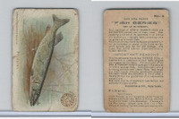 J15, Church & Dwight, Fish Series - Small Size, 1900, #6 Pickerel