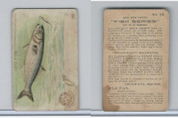 J15, Church & Dwight, Fish Series - Small Size, 1900, #28 Blue Fish