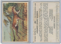D39-8, Gordon Bread, Speed Pictures, 1941, Animal Cheetah
