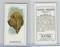 G0-0 G.P. Tea, Dogs Heads, 1963, #11 Bloodhound