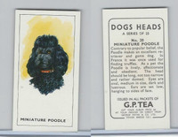 G0-0 G.P. Tea, Dogs Heads, 1963, #20 Miniature Poodle