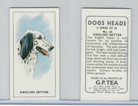 G0-0 G.P. Tea, Dogs Heads, 1963, #24 English Setter