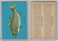 V339-19 Parkhurst, Fish, 1962, #13 Stripped Bass