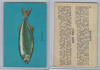V339-19 Parkhurst, Fish, 1962, #41 Goldeye