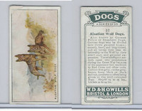 W62-128 Wills Tobacco, Dogs, 1937, #32 Alsatian Wolf Dogs
