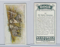 W62-128 Wills Tobacco, Dogs, 1937, #33 Old English Sheepdogs