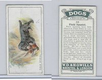 W62-128 Wills Tobacco, Dogs, 1937, #36 Field Spaniel