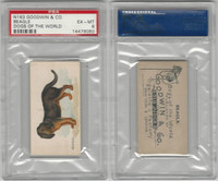 N163 Goodwin, Dogs of World, 1890, Beagle, PSA 6 EXMT