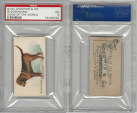N163 Goodwin, Dogs of World, 1890, Bloodhound, PSA 5 EX