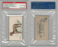 N163 Goodwin, Dogs of World, 1890, Chinese Crested, PSA 6 EXMT