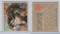 1950 Bowman, Wild Man, #12 Hunting The Mammoth (B)