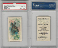 D8 Weber Baking, Animal Pictures, 1920, Giant Kangaroo, PSA 4 VGEX
