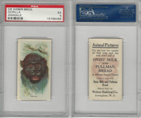 D8 Weber Baking, Animal Pictures, 1920, Gorilla, PSA 5 EX