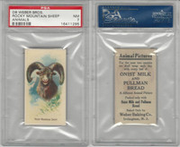 D8 Weber Baking, Animal Pictures, 1920, Rocky Mountain Sheep, PSA 7 NM